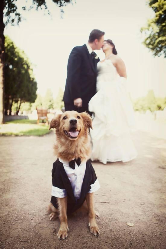 Zvieratká na svadbe 🐾 - Obrázok č. 59
