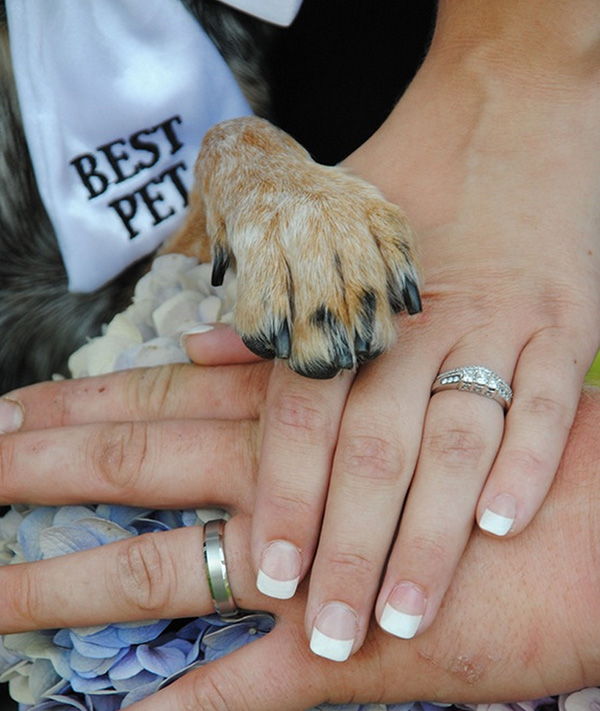 Zvieratká na svadbe 🐾 - Obrázok č. 63