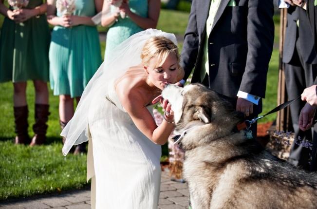 Zvieratká na svadbe 🐾 - Obrázok č. 65