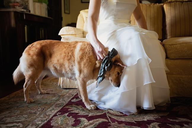 Zvieratká na svadbe 🐾 - Obrázok č. 71