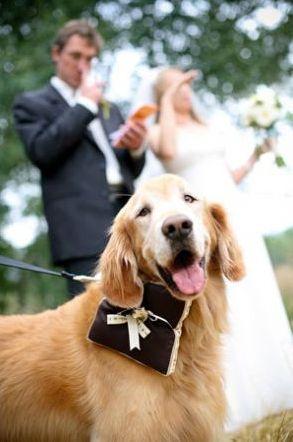 Zvieratká na svadbe 🐾 - Obrázok č. 75
