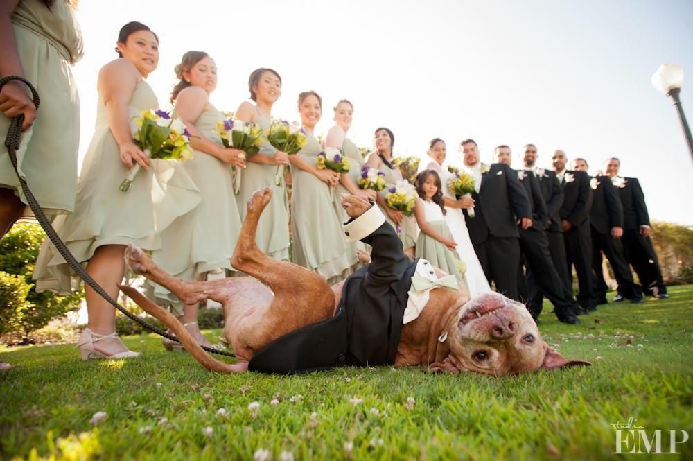 Zvieratká na svadbe 🐾 - Obrázok č. 77