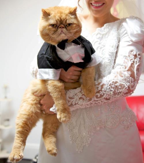 Zvieratká na svadbe 🐾 - Obrázok č. 81