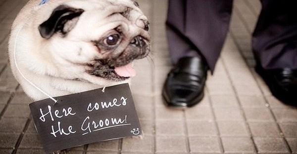Zvieratká na svadbe 🐾 - Obrázok č. 80