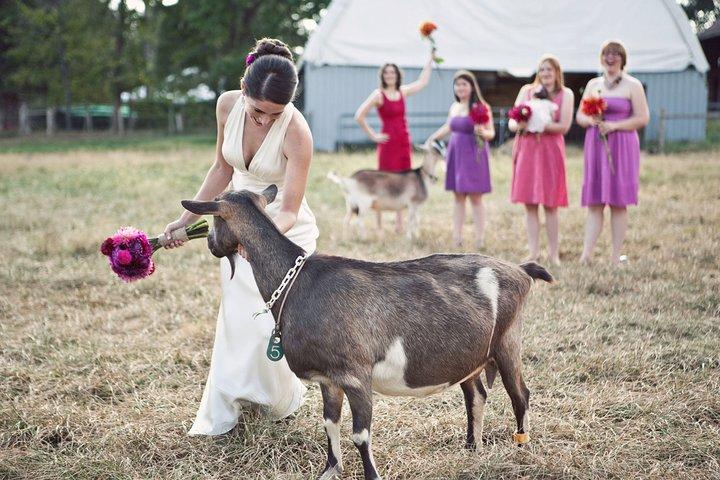 Zvieratká na svadbe 🐾 - Obrázok č. 89