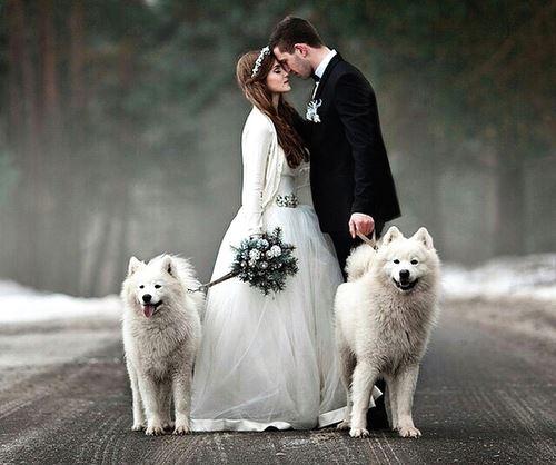 Zvieratká na svadbe 🐾 - Nádherná fotka...