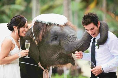 Zvieratká na svadbe 🐾 - Obrázok č. 93