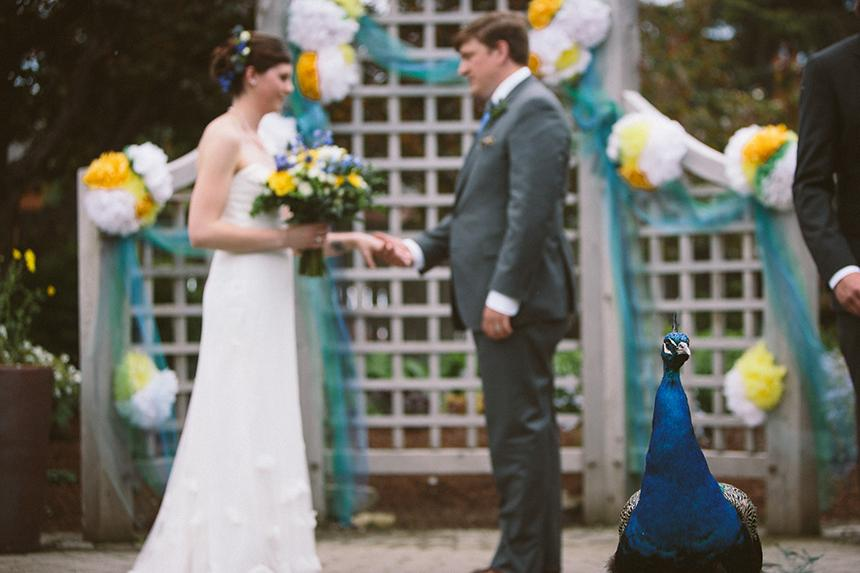 Zvieratká na svadbe 🐾 - Obrázok č. 97