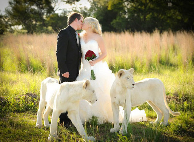 Zvieratká na svadbe 🐾 - Obrázok č. 98
