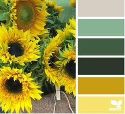 na seeds vycházejí v barevných kombinacích z barev přírody :) a ono to funguje!