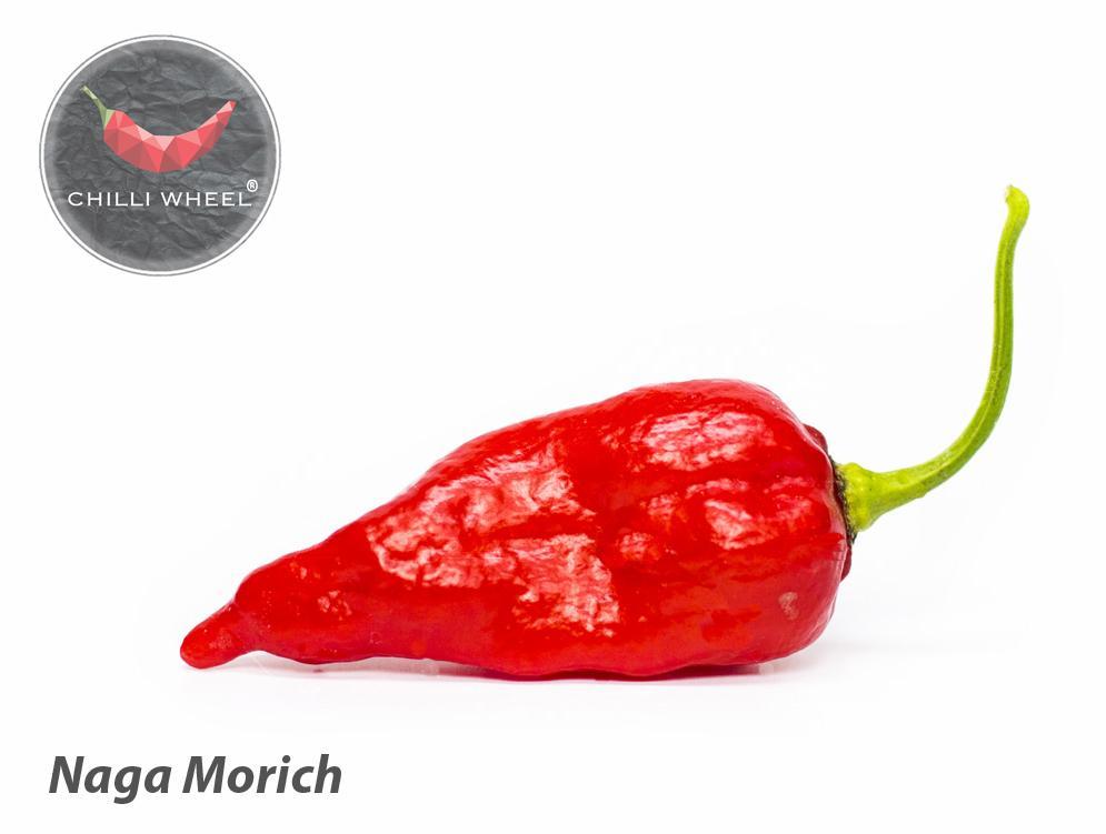 Priesady Chilli papričiek - Capsicum Chinense - Obrázok č. 3