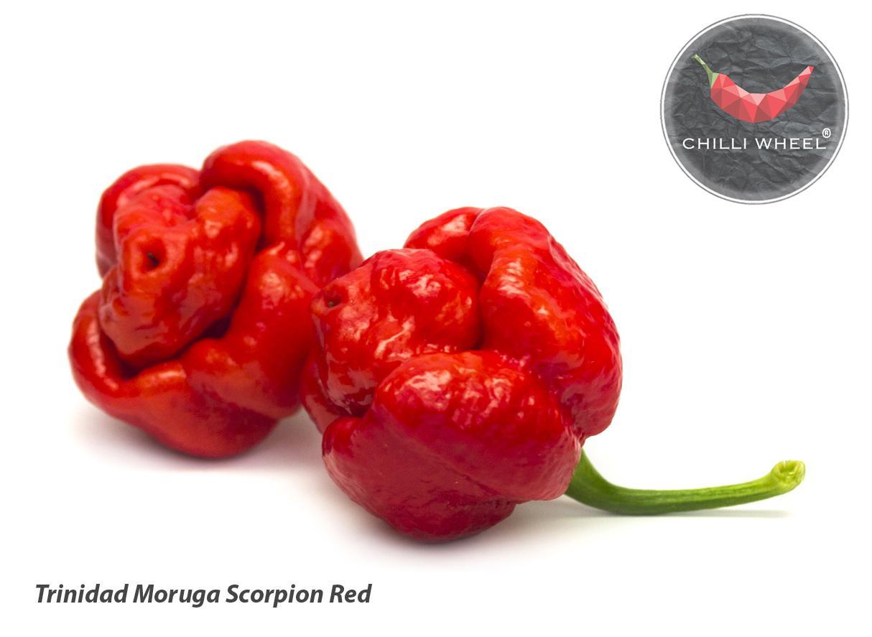 Priesady Chilli papričiek - Capsicum Chinense - Obrázok č. 4