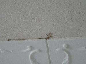 překvapení pod polystyrénem na stropě v podobě molů