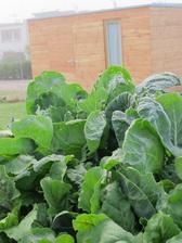 a tohle uz je nas krasavec se zeleninovymi zahonky v popredi ...