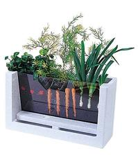 A nebo takhle - dívej se jak ti roste mrkev! :)