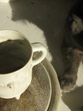 jedno ráno, jedno světlo, jedna kočička ... :)