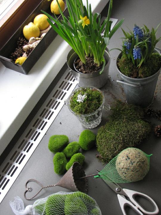 Zahradní ... - jeden menší jarní nákup (původně doprovod mámy na výstavu orchidejí)