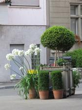 podobna kvetinarstvi jsou tu temer na kazdem rohu. chodim je zatim jen okukovat. ale ty kalokvety na balkone by vubec nebyly spatny! :)