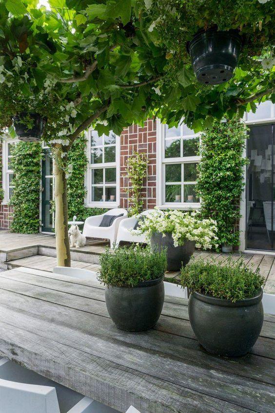 Terasa, záhrada - Obrázok č. 2