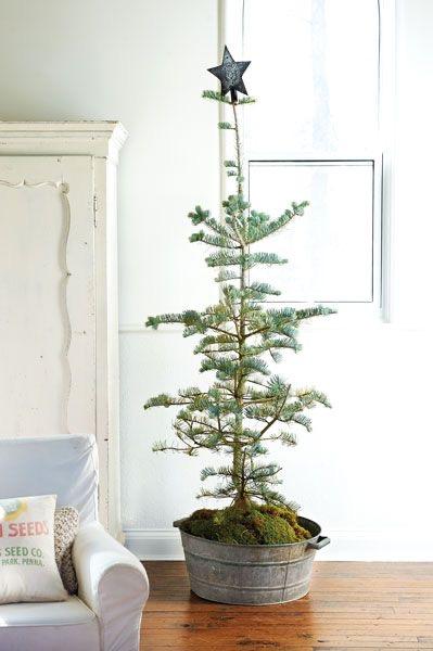 Najväčší symbol Vianoc, aký bude tento rok ... - Obrázok č. 51