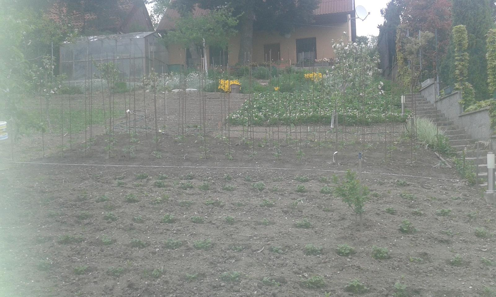 Naše átrium - rodičovská záhrada zdola