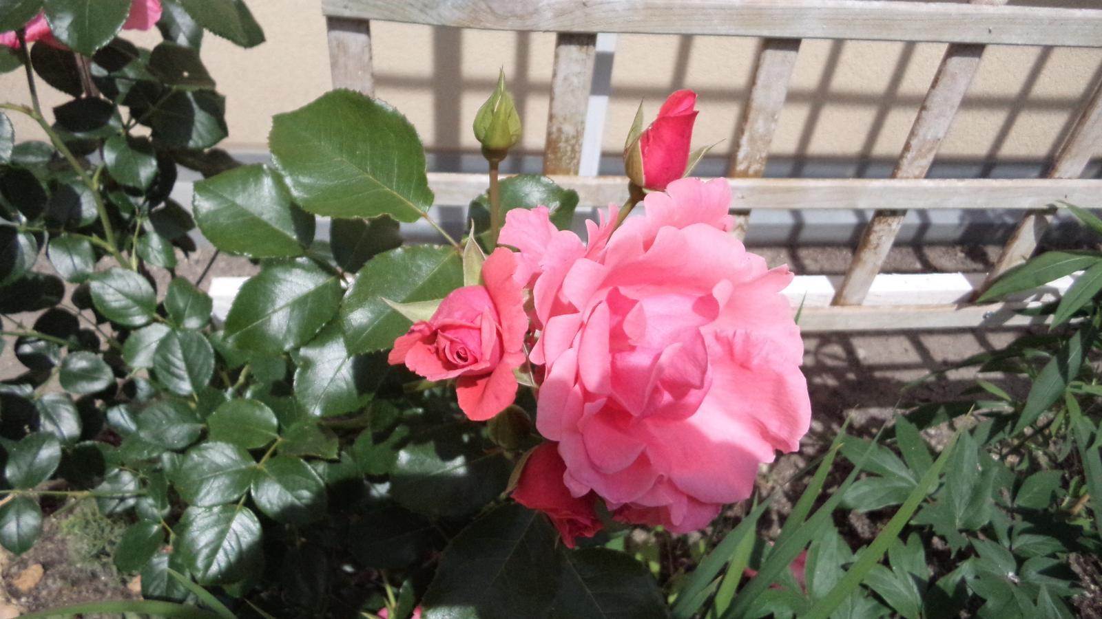 Naše átrium - Blossomtime
