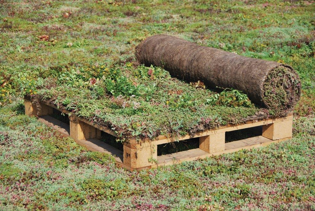 Ako jednoducho vybudovať zelenú strechu I. - 2.Pripravíme si súčasti systému – koreňovú membránu, odvodňovací systém, substrát a vegetačný kryt. S aplikáciou začnite do 24 hodín po dodaní materiálu, pretože vegetačný kryt Urbanscape nemožno skladovať v baloch dlhšie ako pár dní
