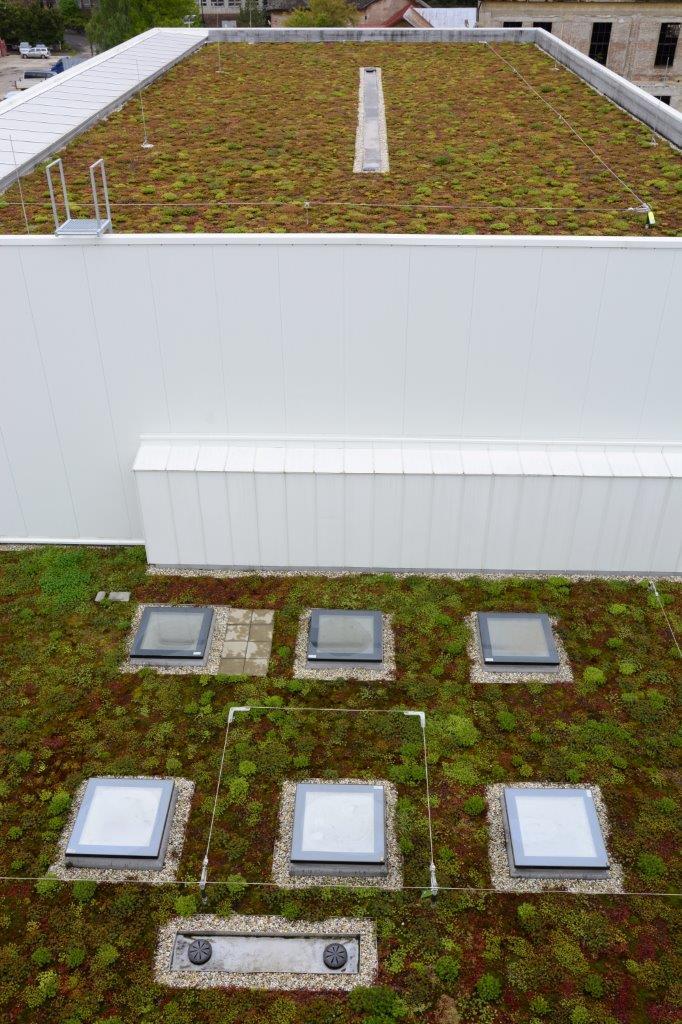 """Zázračná škola pod zelenou strechou - Vegetačná strecha predlžuje životnosť hydroizolačného systému, plní vodozádržnú funkciu, znižuje akustické namáhanie objektu, čiže tlmí hluk z exteriéru. """"Oproti štandardnej plochej streche má veľa výhod, tak prečo ju nevyužiť? Myslím, že by to mala byť bežná súčasť takýchto veľkých projektov,"""" dodáva architekt."""