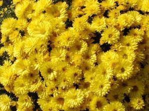 kvety do kytice