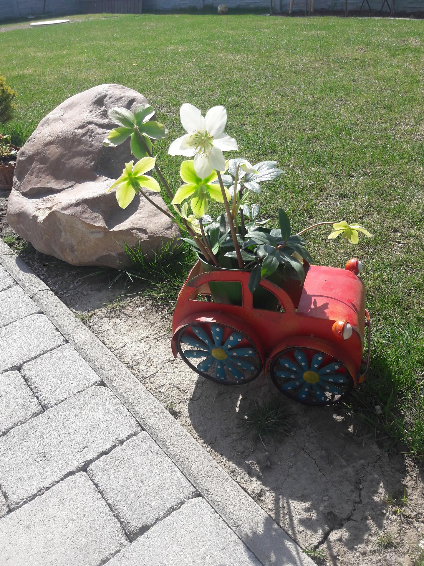 Záhrada 2021❤ - Obrázok č. 10