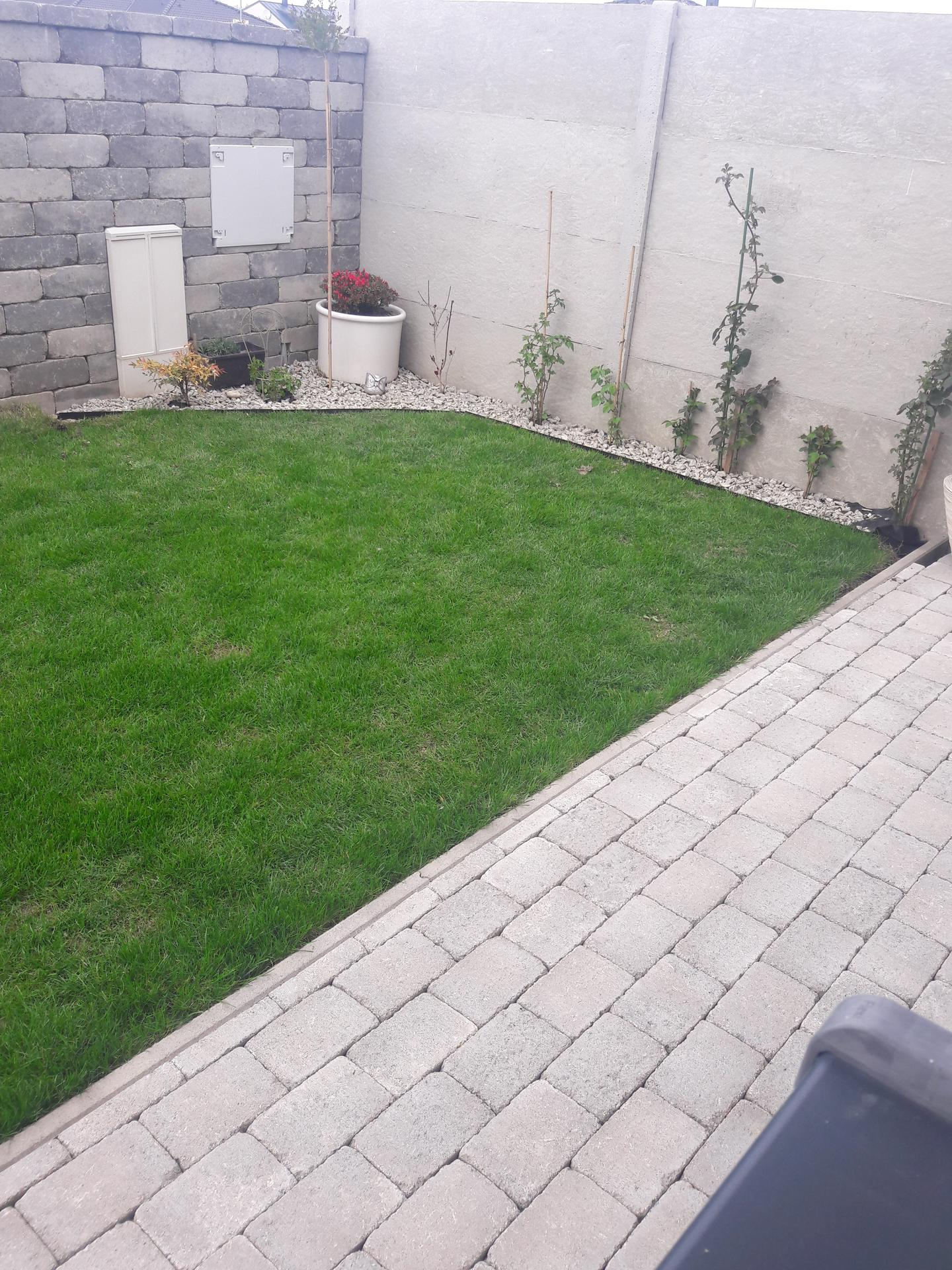 Záhrada 2021❤ - Obrázok č. 20