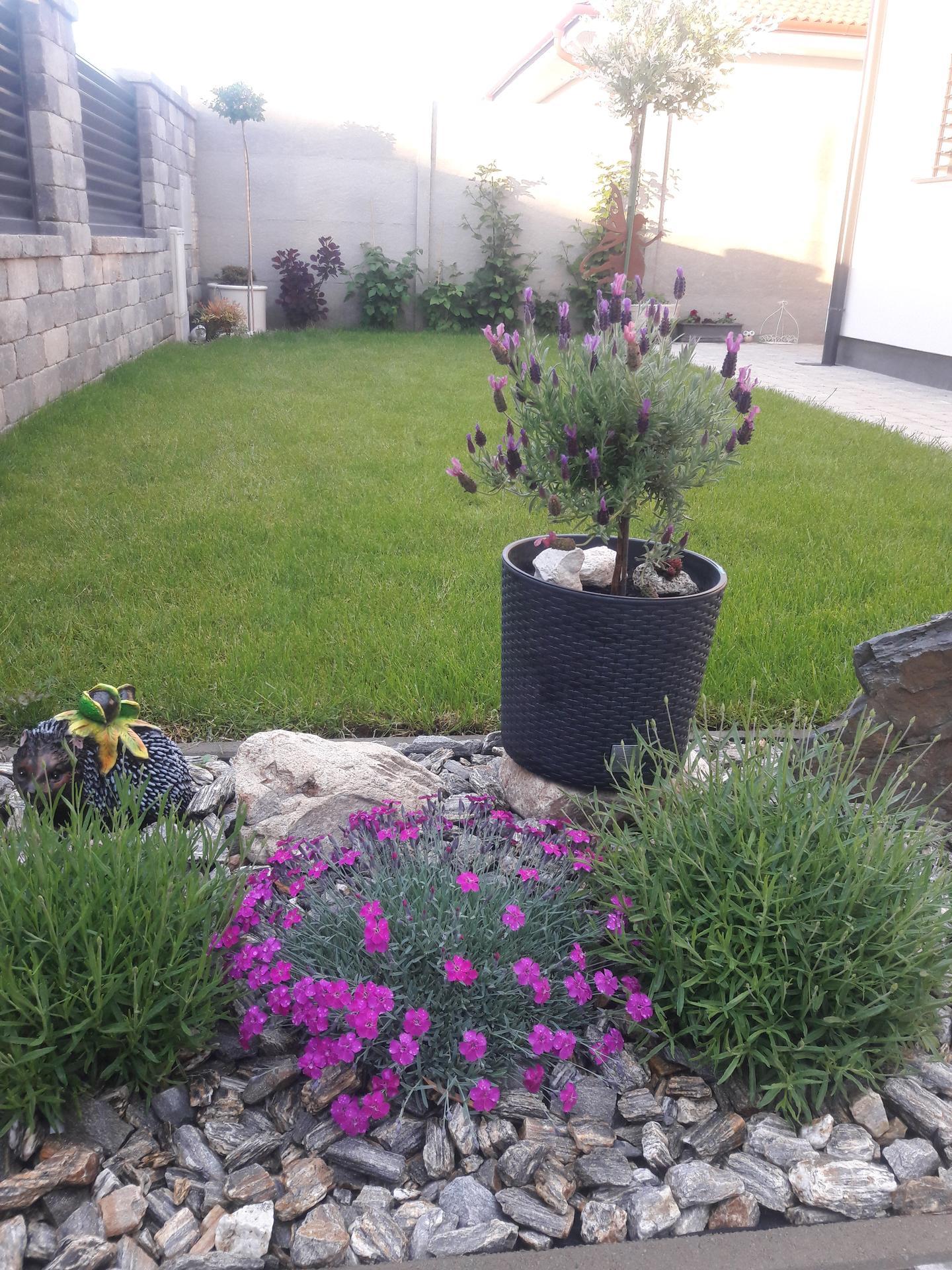 Záhrada 2021❤ - Obrázok č. 34