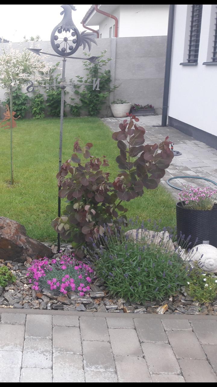 Záhrada 2021❤ - Obrázok č. 35