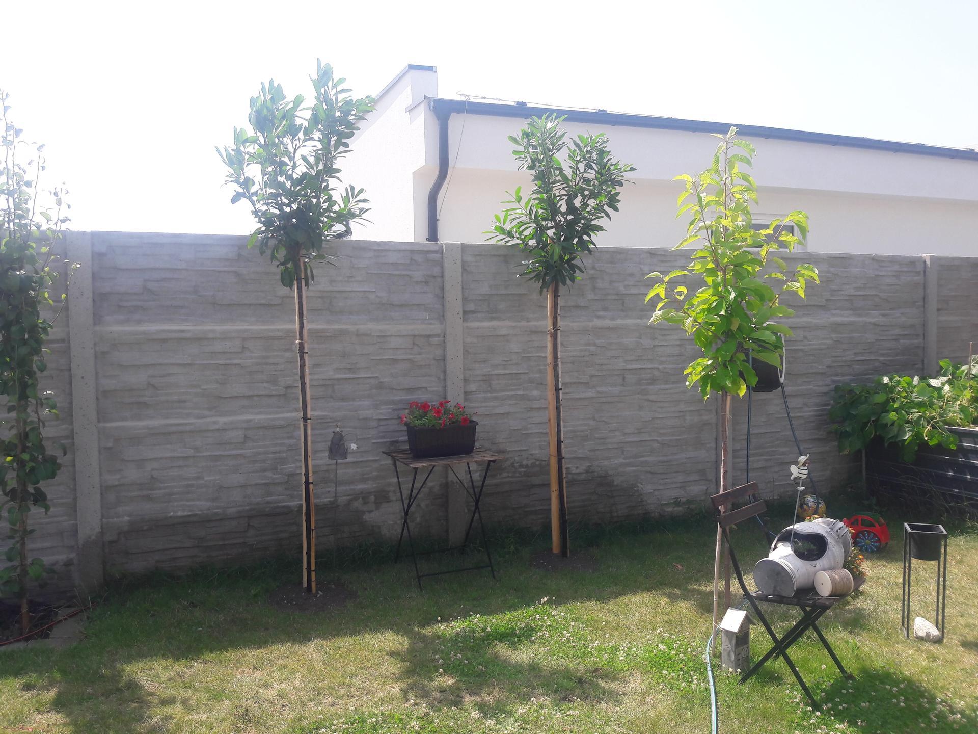 Záhrada 2021❤ - Obrázok č. 42