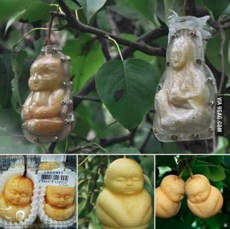 V Číne pestovatelia dávajú... - Obrázok č. 2