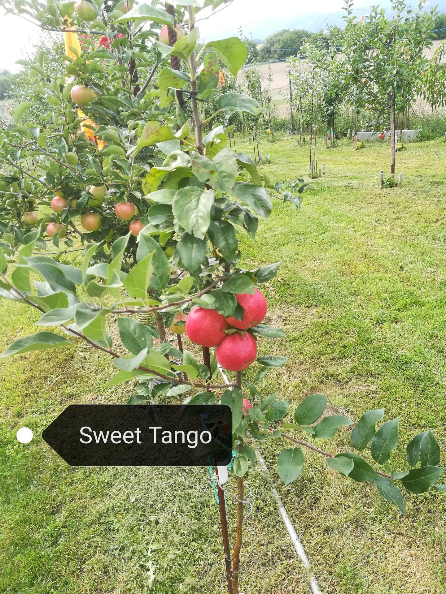 Sweet Tango sa krásne... - Obrázok č. 1