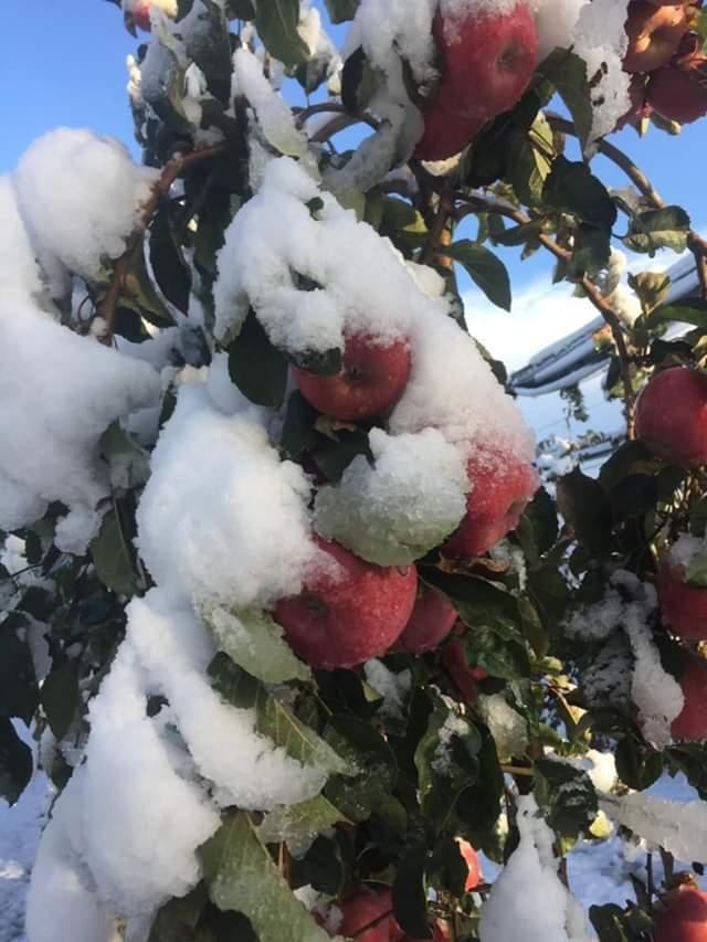 V Taliansku napadol sneh... - Obrázok č. 1