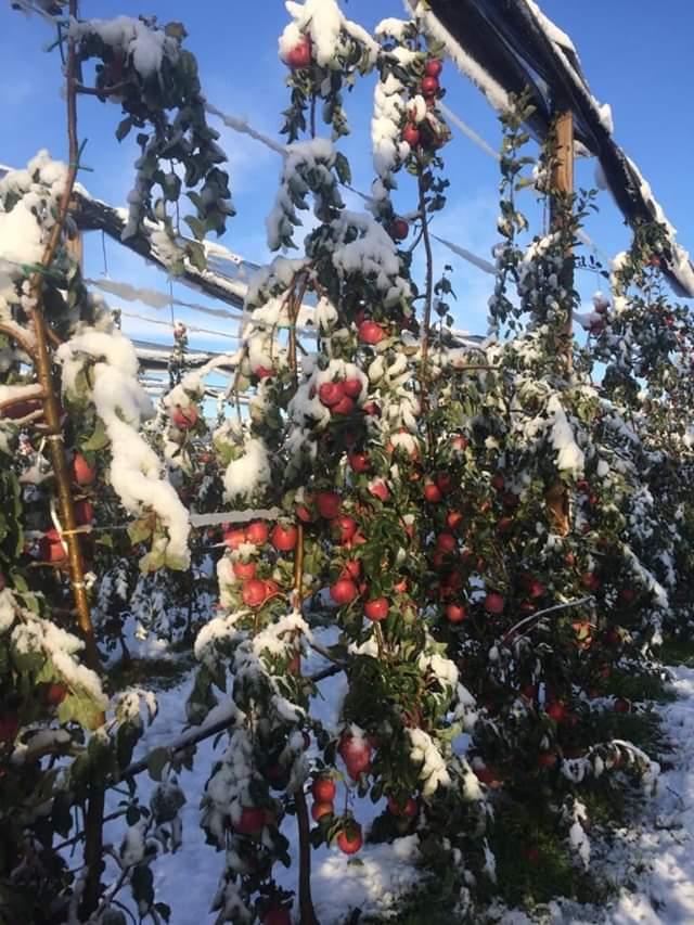 V Taliansku napadol sneh... - Obrázok č. 2