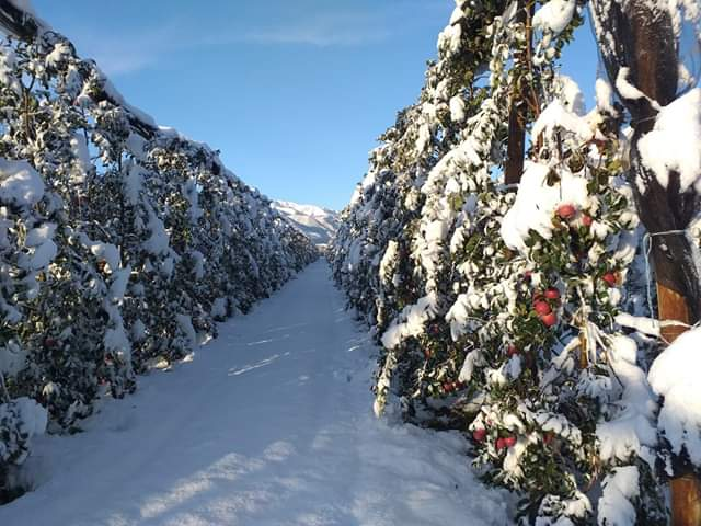 V Taliansku napadol sneh... - Obrázok č. 3