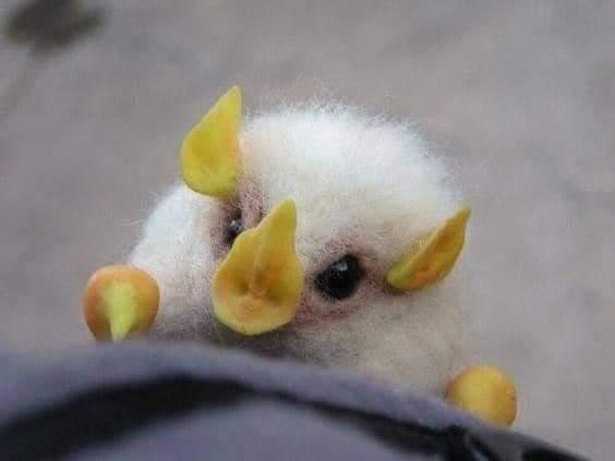 Nádherný biely netopier. - Obrázok č. 1