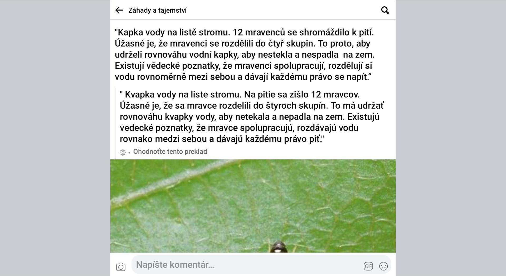 Mravce a ich súdržnosť. - Obrázok č. 1