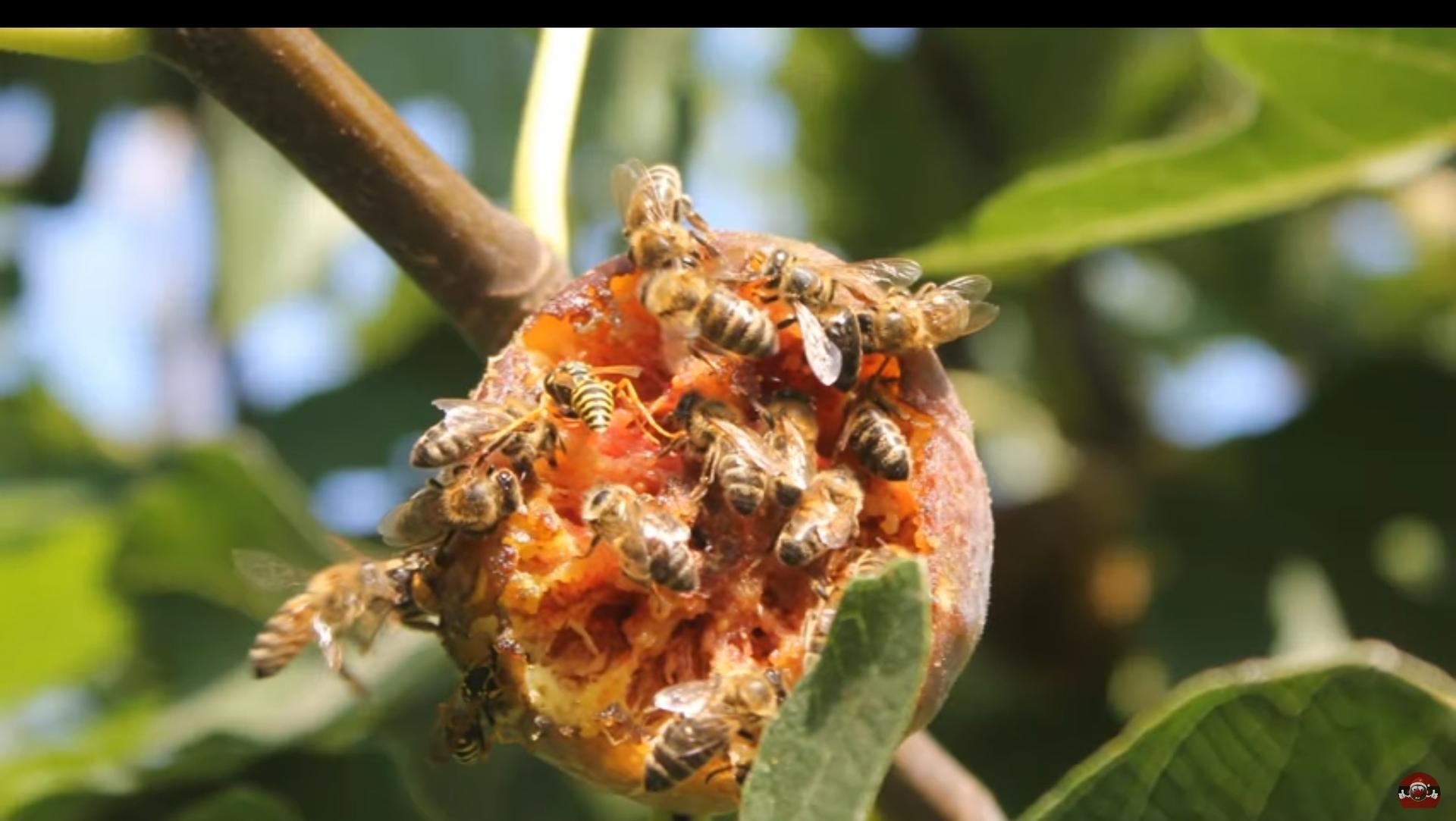 Škodcovia,alebo pomocníci,takto včely a... - Obrázok č. 1