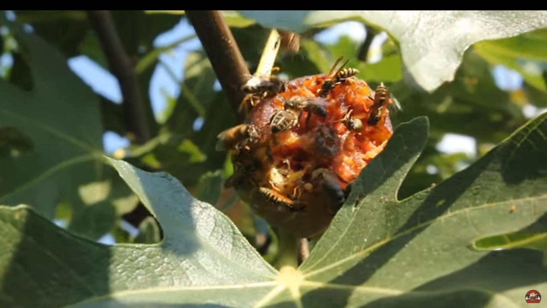 Škodcovia,alebo pomocníci,takto včely a... - Obrázok č. 2
