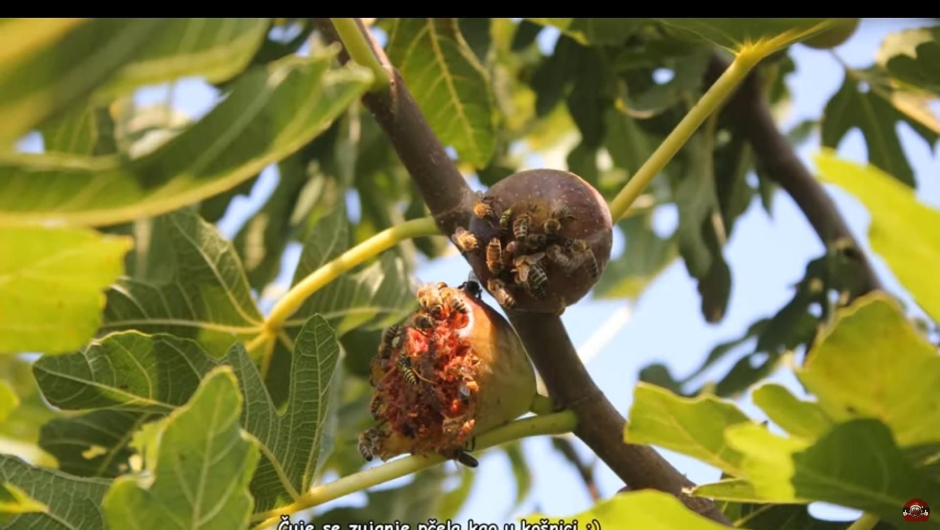 Škodcovia,alebo pomocníci,takto včely a... - Obrázok č. 3