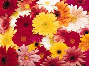 pre milovnikov kvetiniek