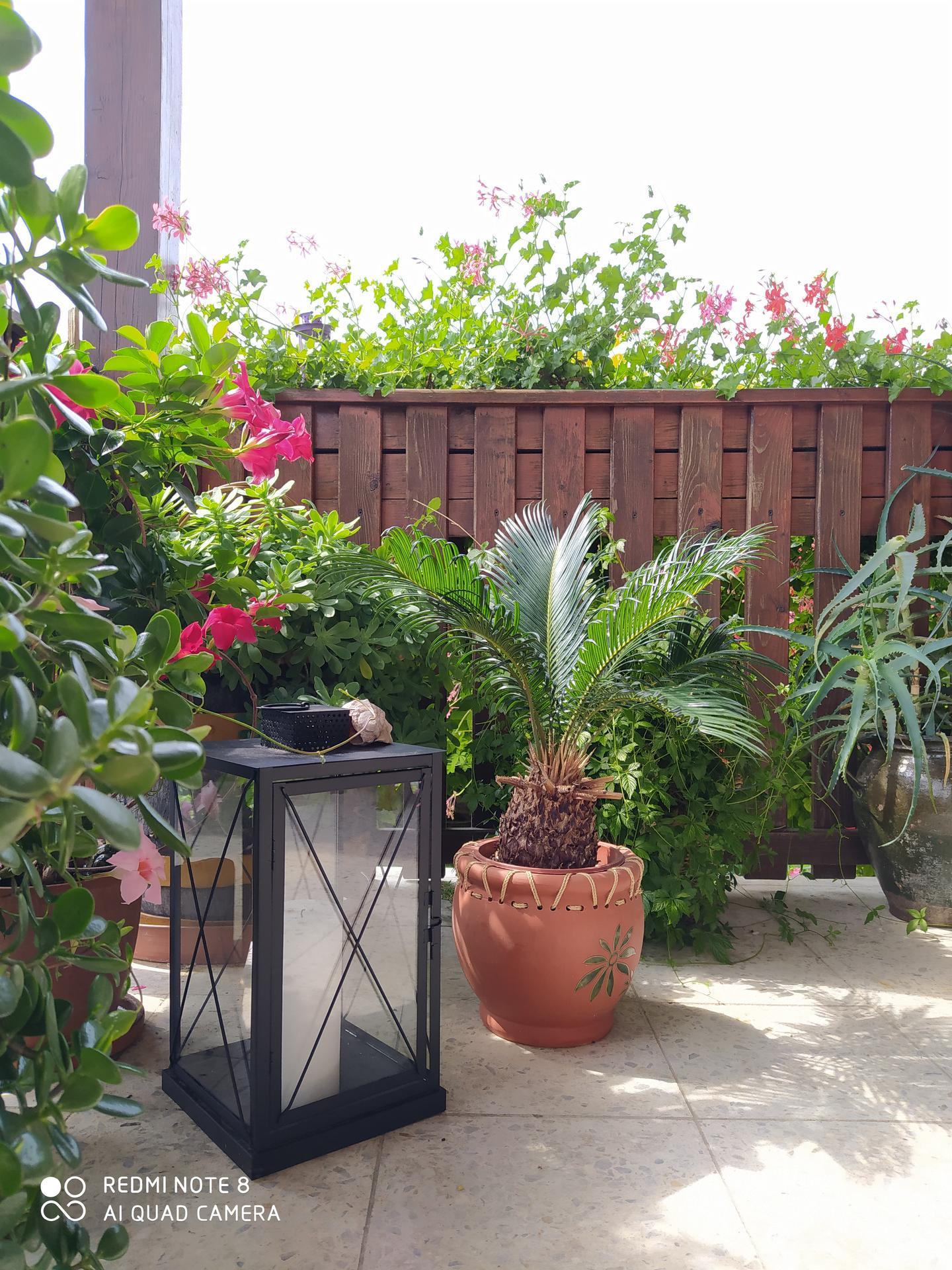 Moja vidiecka záhrada