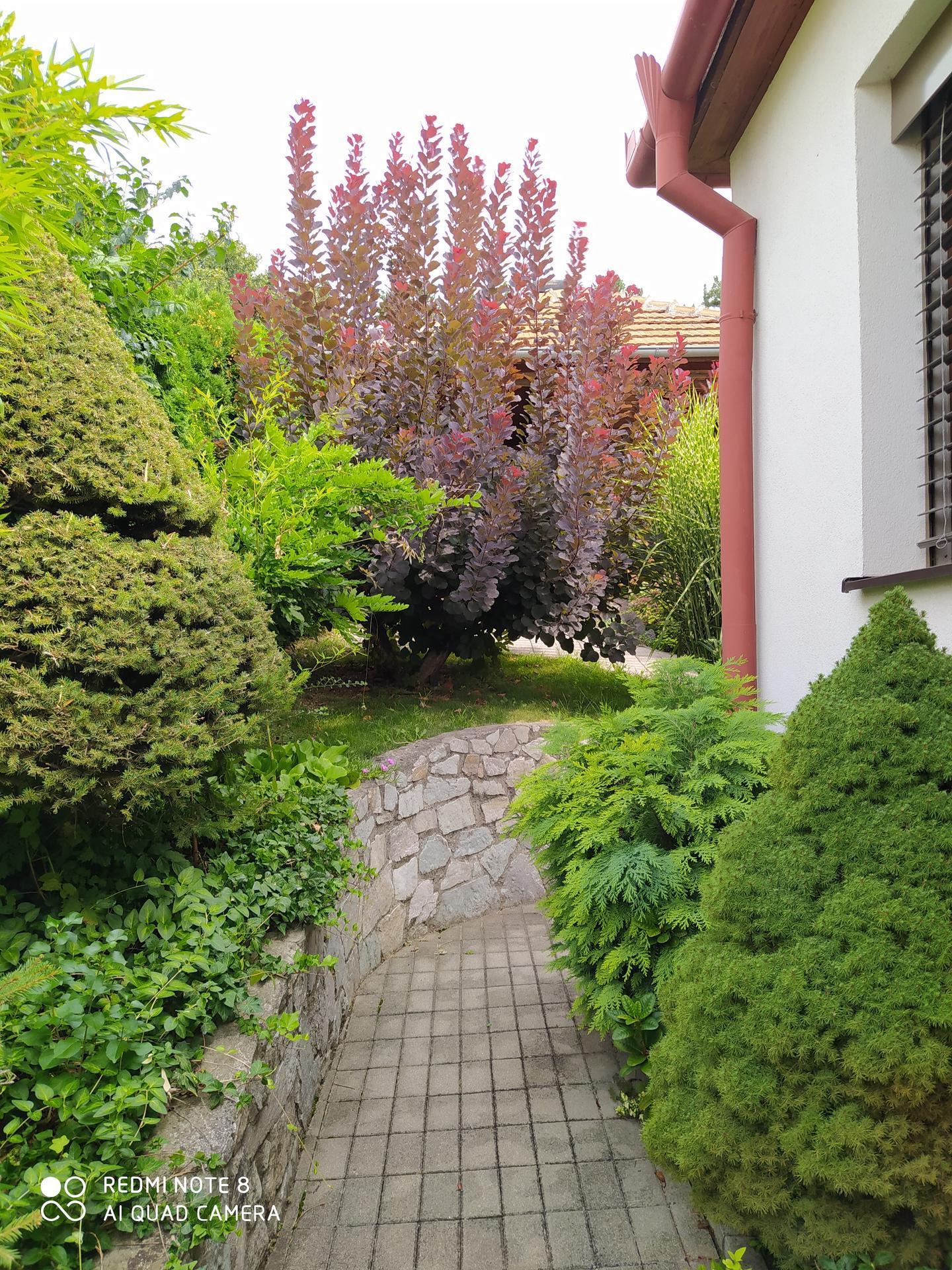 Moja vidiecka záhrada - Obrázok č. 3