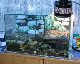 Naše želvy v původním akváriu ještě ve starém bytě... začalo jim být těsné a tak jsme se přestěhovali :-)))