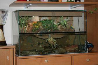 Naše želvy v novém příbytku - no řekněte, nemají luxusní bydlení?