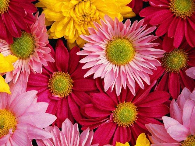 Svadobne kytice - Obrázek č. 8